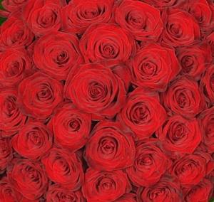 Mazzo 360 rose rosse