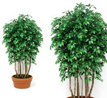 Ficus bosco artificiale verde cm 200