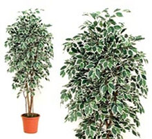 Artificial Plant ficus variegated 200 cm