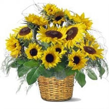 Aliflora basket Sunflowers