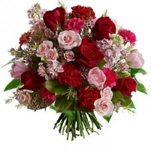 Aliflora rose and harmony