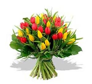Aliflora Tulips