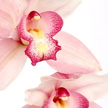 Package Orchids