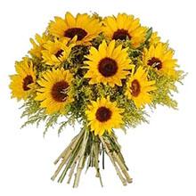 Aliflora Sunflowers