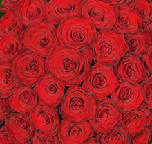 Bouquet  720  red roses