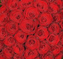 Rose Extra a tua scelta